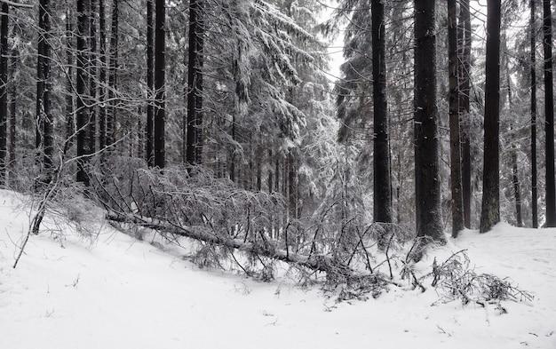 Winter landscape, fallen tree in a snowy northern forest