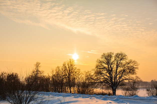 Winter landscape. field covered with snow and bald trees.