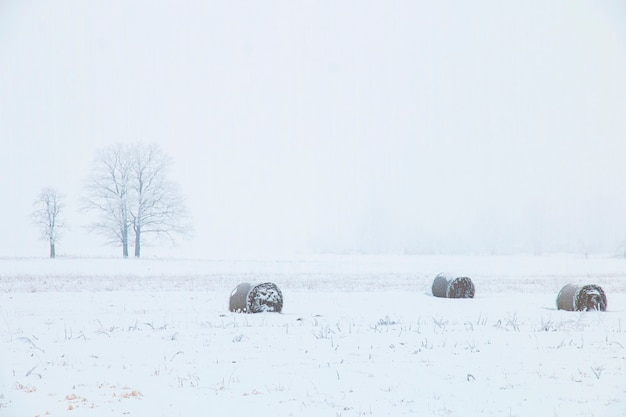 Зимний пейзаж, поле со стогами сена и одинокое дерево