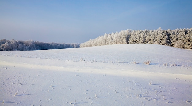Winter landscape in a field with snow