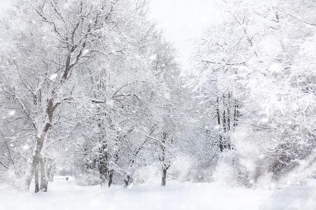 冬の風景。雪の下の森。公園の冬。