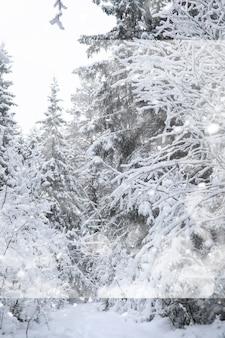 Зимний пейзаж. лес под снегом. зима в парке.