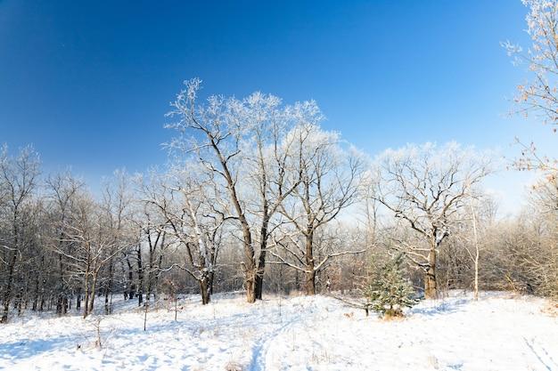 Winter landscape of frosty trees on foggy background