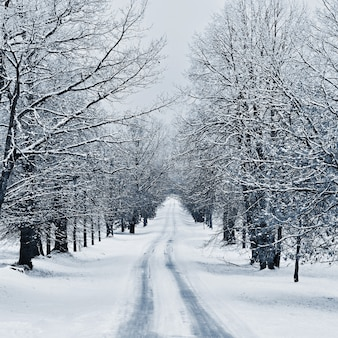 Winter landscape - frosty trees in the forest. nature covered with snow. beautiful seasonal natural background.