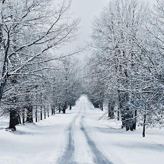 冬の風景 - 森の中の霜降りの木々。自然は雪で覆われています。美しい季節の自然の背景。 Premium写真