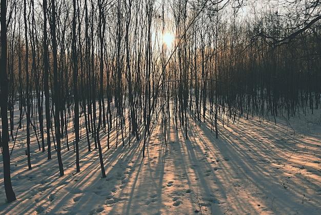 冬の風景 - 霜降りの木々。雪のある自然。美しい季節の自然の背景。