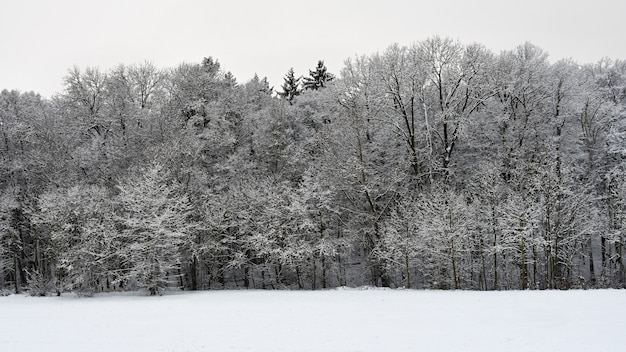 Winter landscape - frosty trees. nature with snow. beautiful seasonal natural background.