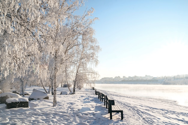 Winter landscape of frosty trees, white snow in city park.