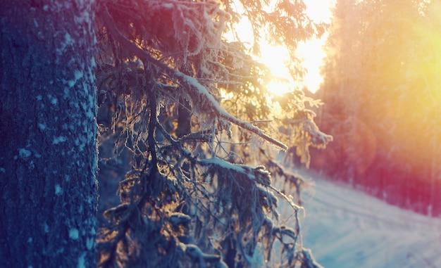 冬の風景。凍ったタイガの森