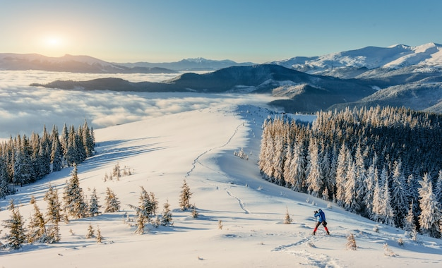 햇빛으로 빛나는 겨울 풍경. 카 르 파티 아, 우크라이나, 유럽