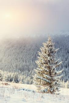 Winter landscape glowing by sunlight. dramatic wintry scene.