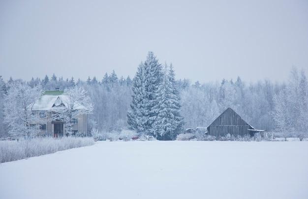 Зимний пейзаж, дома лесных деревьев, покрытых снегом