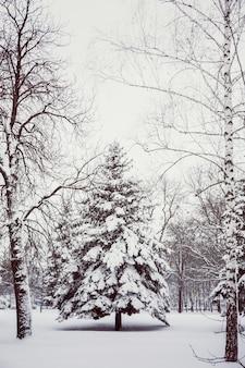 설 날에 도시 공원에서 겨울 풍경