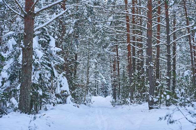 鬱蒼とした雪の森の冬の風景