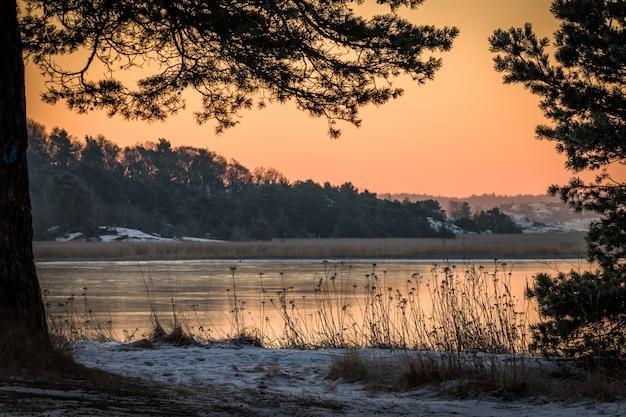 Зимний пейзаж в розовом утреннем свете вид на океан через сосны
