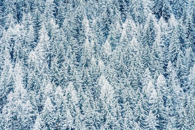 Зимний пейзаж в лесу, альпы, франция