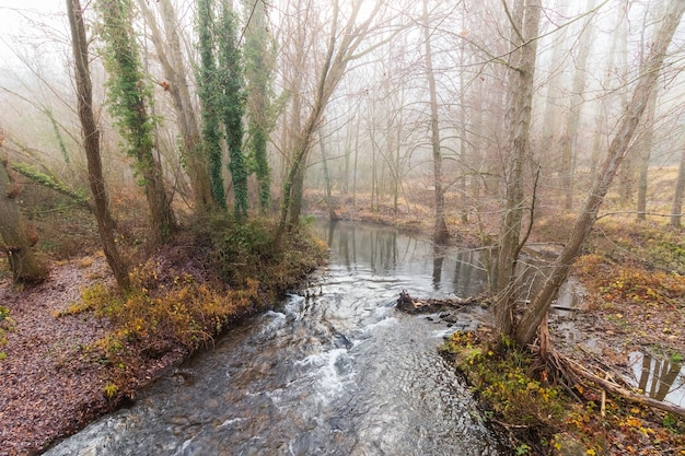 川のある森、葉のない木々、そして環境の激しい霧のある森の冬の風景。デュラトン、セプルベダ、セゴビア。エウロパ。