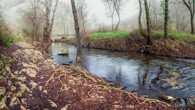川のある森、葉のない木々、そして環境の激しい霧のある森の冬の風景。デュラトン、セプルベダ、セゴビア。スペイン。