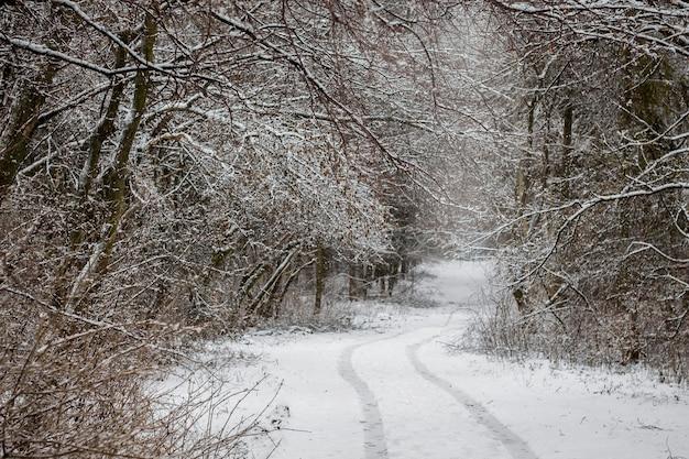 森の中で冬の風景、森の木々は雪で覆われています-道路