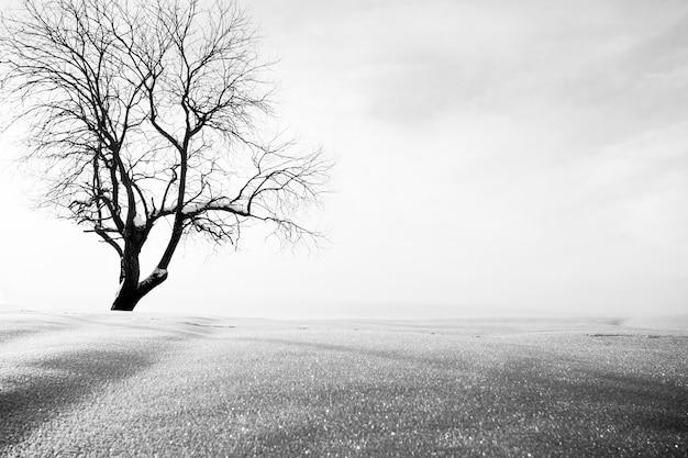 Зимний пейзаж, изолированное дерево и снег. минимальный пейзаж. в цифровом виде изменен.