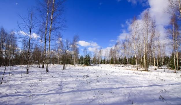 冬の風景。寒い晴れた日に歩いている小さな黒い犬。 Premium写真