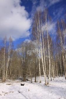 冬の風景。寒い晴れた日に歩いている小さな黒い犬。