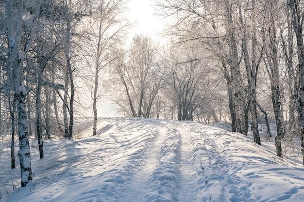 Зимний пейзаж морозных деревьев, белый снег в городском парке.