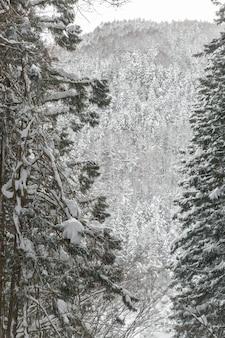 松林の冬景色