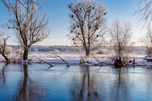 晴れた朝の川の冬の風景。日光の下で真っ青な空を背景に背の高い木々で雪に覆われた川沿い