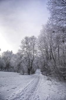カラフルな空を背景に雪に覆われた木の枝の冬の風景