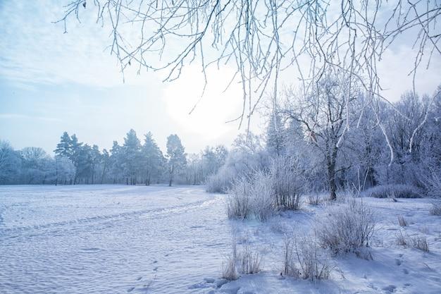 Зимний пейзаж заснеженных ветвей деревьев против красочного неба