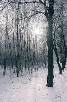 화려한 하늘에 대 한 눈 덮인 나뭇 가지의 겨울 풍경