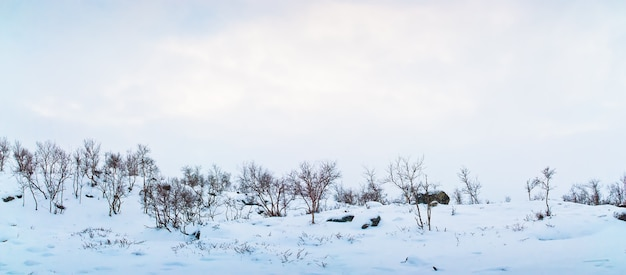 Зимний пейзаж тундры