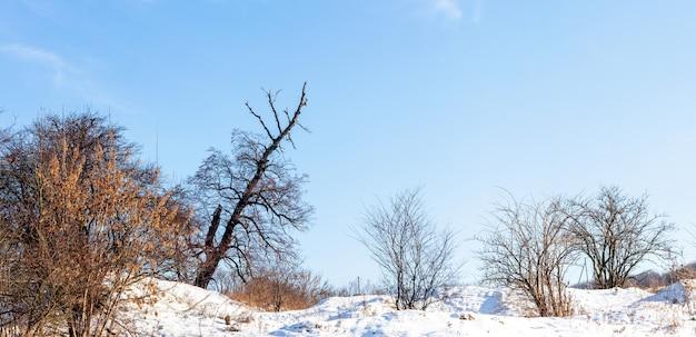 冬の風景、パノラマ、晴れた日には雪の表面に裸の木があります