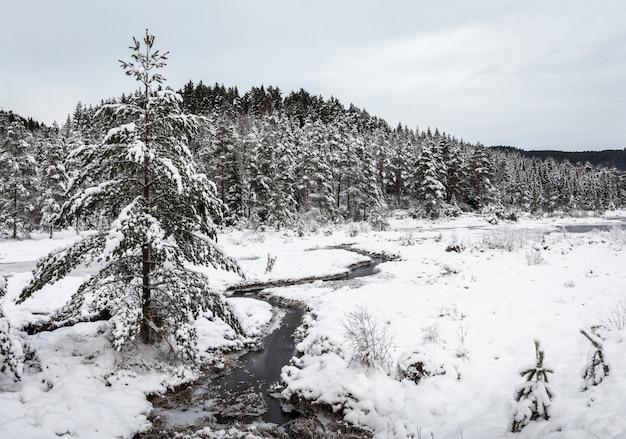 冬の風景、ノルウェー南部の小川の横にある雪に覆われた松の木