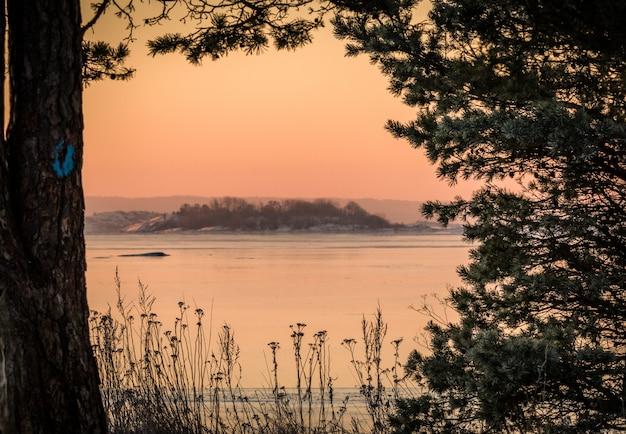 Зимний пейзаж розовый утренний свет океан сквозь сосны