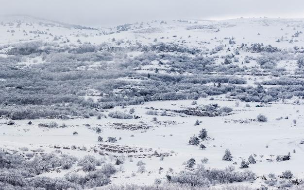 Зимний пейзаж. заснеженный лес в горах