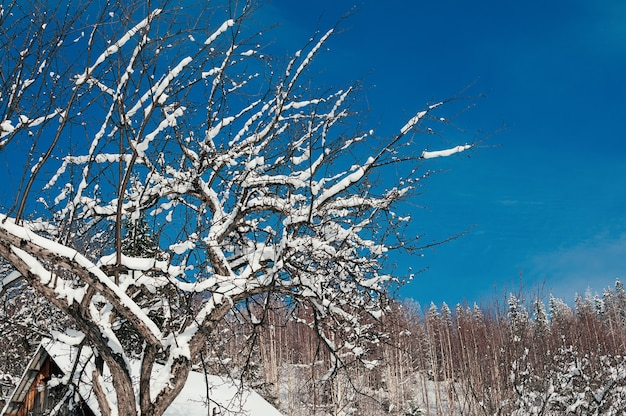 Winter landscape of snow covered tree branches against vivid blue sky.