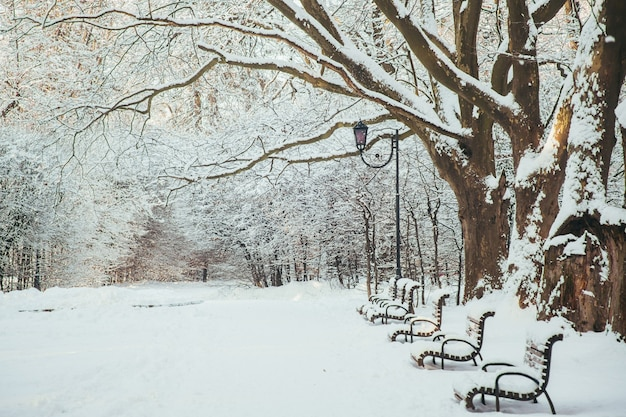 Зимний пейзаж, заснеженные деревья и скамейки в парке