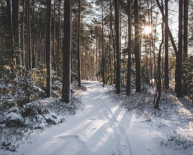 冬の風景、トウヒの森の雪道