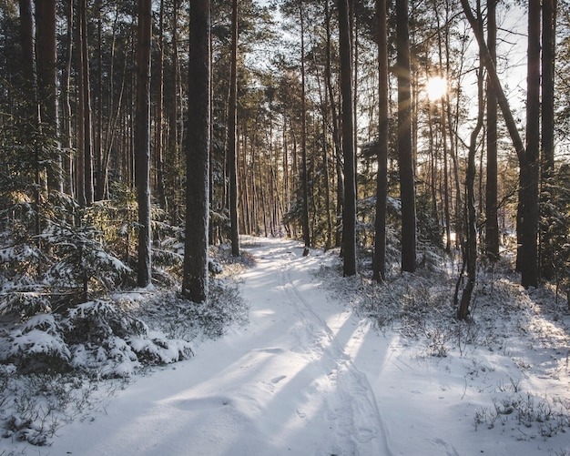 Winter landscape, snowy road in the spruce forest