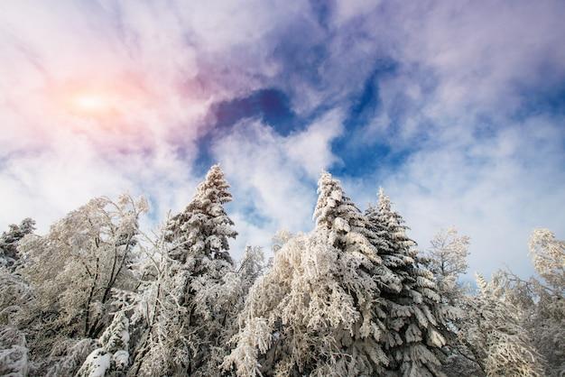 프 로스트의 겨울 풍경 나무