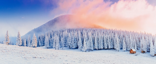Зимний пейзаж деревьев в мороз