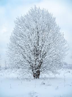 Зимний пейзаж деревья в снегу