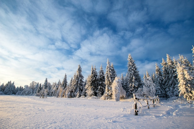 Winter landscape trees in snow