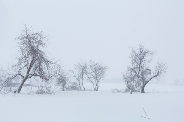 Winter landscape. trees without foliage in a field covered with snow.