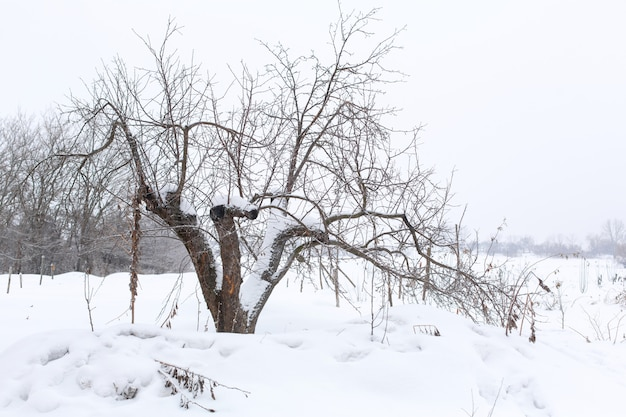 Зимний пейзаж деревья без листвы в поле, покрытое снегом