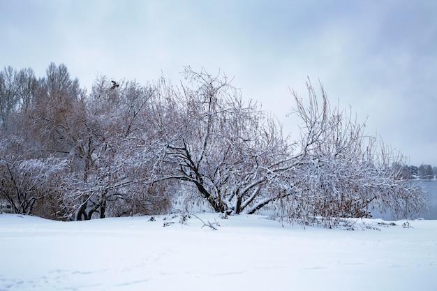 Winter landscape trees