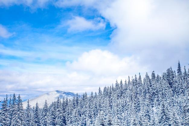 Winter landscape. wild nature background