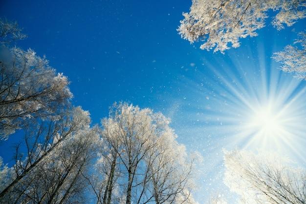 冬の風景 - 明るい日差しの下、霜降りの木々のあるウインターフォレストの自然